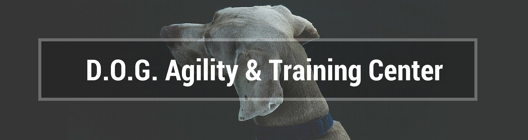 D.O.G. Agility and Training Center